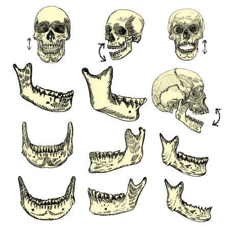 Human skull bones drawing set. Creation set skull and lower jaw. Moving up and down. Skulls from different directions. Vector illustration.