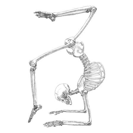 Human bones skeleton drawing. Dancing or doing gymnastic. With arms, legs, skull. Sport vector illustration. Vettoriali