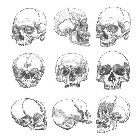 art museum: Big set of anatomic skulls in different directions and conditions, weathered and museum quality, medical study detailed hand drawn illustration. T-shirt rock music prints. Vector Art. Illustration