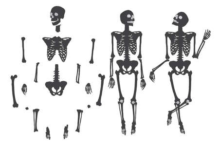 do it: Human skeleton. Black on white. Set do it yourself with moving arms, legs, skull and wrist. Vector