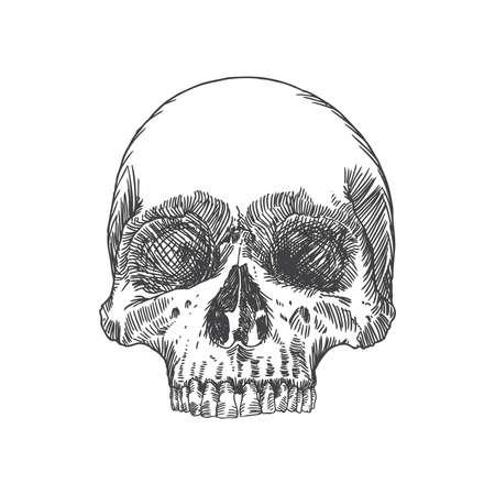 Monochromatyczny anatomiczny rysunek czaszki bez dolnej szczęki, na białym tle. Weathered, muzeum jakości, szczegółowe ręcznie rysowane ilustracji. Sztuka Vector.