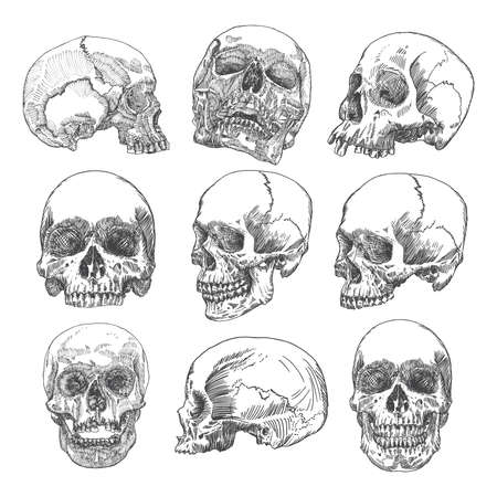 Big set of anatomic skulls in different directions and conditions, weathered and museum quality, medical study detailed hand drawn illustration. T-shirt rock music prints. Vector Art. Ilustracja