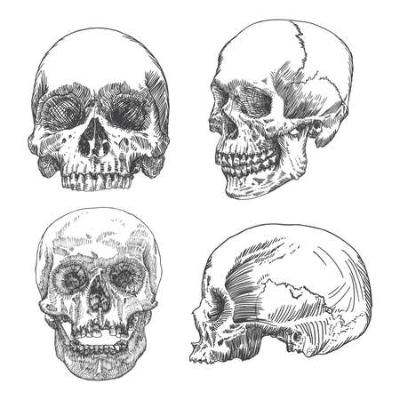 Set of anatomic skull in different conditions and views, weathered and museum quality, detailed hand drawn illustration. Vector Art.