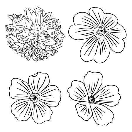 aster: Set of flowers. Black and white floral set collection of hand drawn.
