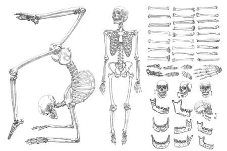 Human Anatomy Drawing Monochrome Set With Skeletons And Single
