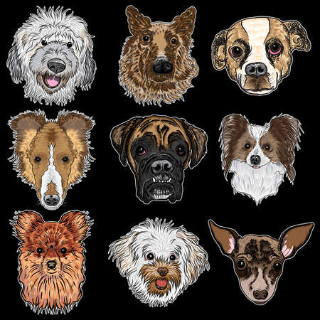 Vector set of different dogs breeds isolated on black. Labradoodle, German Shepherd, Beagle, Collie, Boxer, Pomeranian, Bolognese, Toy Terrier, French Bulldog