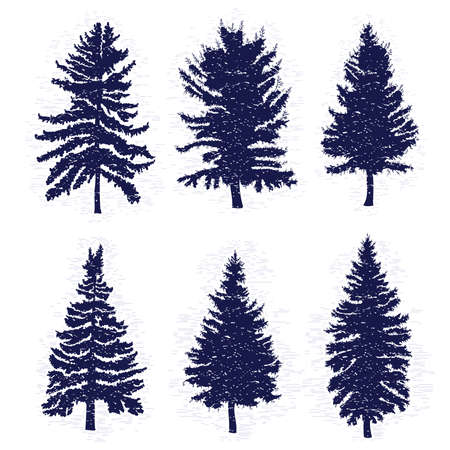 ベクトルは様々 な森と免震設計にモミの木のシルエット、白地に分離された松の木を設定します。