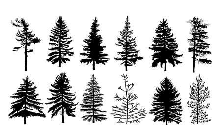 Conjunto de vectores silueta de diferentes árboles de pino canadiense. siluetas de los árboles de coníferas en el fondo blanco Colección. Manojo de árboles. Ilustración de vector