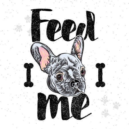 Vector illustration of a hand drawn fashionable French Bulldog with feed the pet sign for dog owner card.