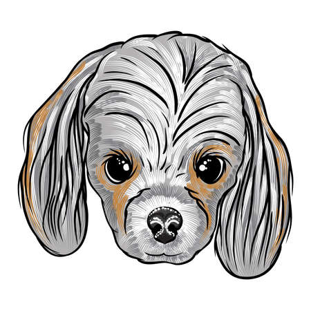 Portrait of Cocker Spanie puppy. Hand drawn dog illustration. T- shirt and tattoo concept design. Vector. Illustration