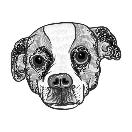 Portrait of  Beagle. Hand drawn dog illustration. T- shirt and tattoo concept design in black white. Vector.