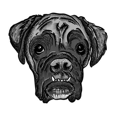Ritratto di Boxer doggy. Illustrazione di cane disegnata a mano. T-shirt e design concetto di tatuaggio in bianco nero. Vettore. Archivio Fotografico - 74302974