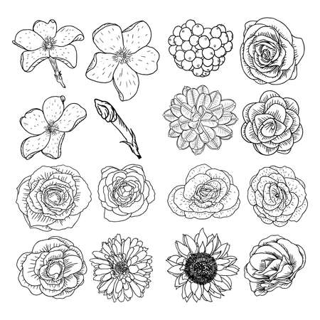 Vector set of flowers, black and white collection of hand drawn floral elements.