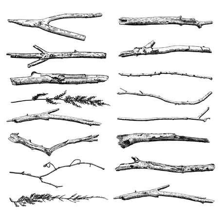Set of Driftwood, ground floor hand drawn ink rustic design elements collection. Dry tree branches and wooden twigs. Vintage highly detailed classic ink drawings bundle art in engraved style. Vector.  イラスト・ベクター素材