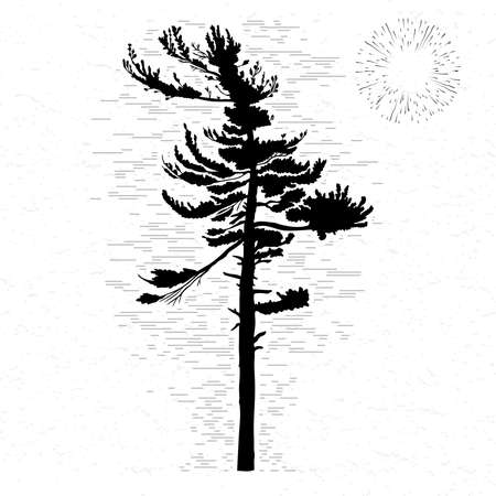 Fir tree on white textured background illustration. Black coniferous tree silhouette. Hand drawing. Ilustracja