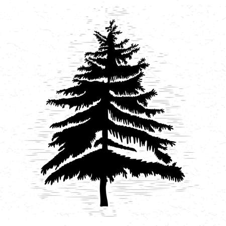 Fir tree on white textured background illustration. Black coniferous tree silhouette. Hand drawing. Illustration