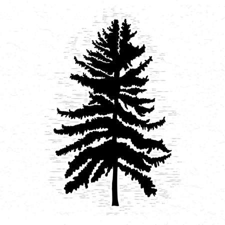 Spar op witte geweven illustratie als achtergrond. Zwart naaldboomsilhouet. Handtekening.
