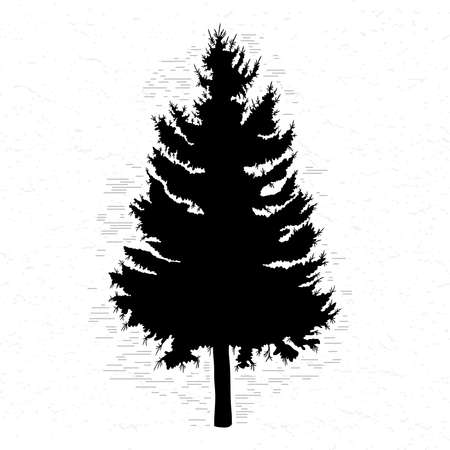 Vector silhouette of Canadian pine tree. Conifer tree silhouettes on the white textured background.