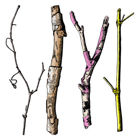 Hand painted wood twig set, ink rustic design elements collection. Dry wood tree branch and wooden twig bundle. Detailed and precise watercolor imitation driftwood twigs set. Vector. Illustration