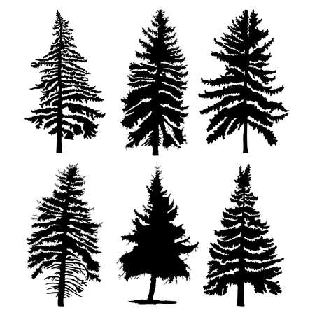 Fir trees set isolated on white background illustration. Collection of black coniferous trees silhouettes. Hand drawing. Ilustracja