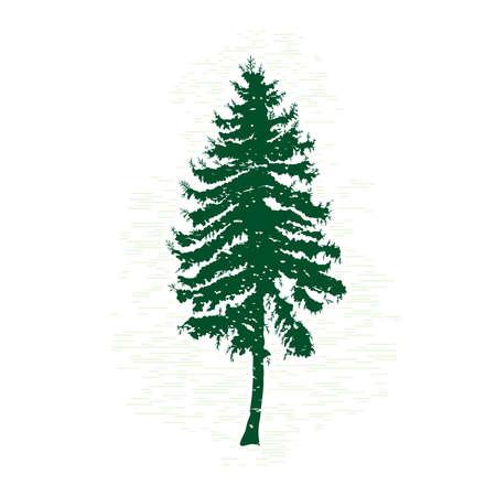 緑松のシルエット、ベクターイラスト。ヴィンテージテクスチャグランジモミの木のデザインテンプレート。ベクターイラスト。  イラスト・ベクター素材