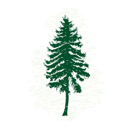Silhouettes of green pine tree, vector illustration. Vintage textured grunge fir tree design template. Vector illustration.