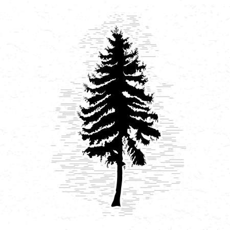 Vector silhouet van Canadese denneboom. Conifeer boom silhouetten op de witte gestructureerde achtergrond. Stock Illustratie