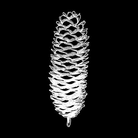 Pine cone of cedar spruce fir tree. Hand drawing vector illustration. Pinecone on black bacground.