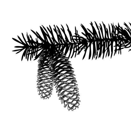白い背景の上の針を使って木の枝に円錐形の松を描画の手をスケッチします。クリスマス手描きのモミの実木、杉、もみ、hemlocks として、カラマツ