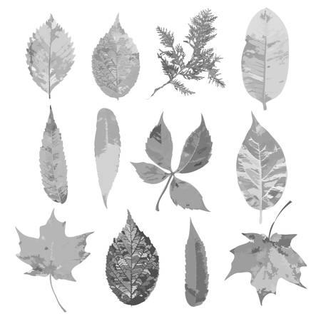 fall leaves set, autumn collection, vector Ilustração