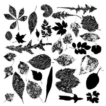 Black silhouettes of foliage-vector Ilustração