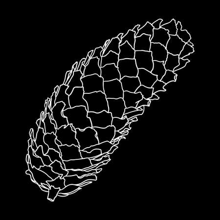 Vector hand drawing black and white realistic illustration of pine cone, fir cone with open shells. Illustration