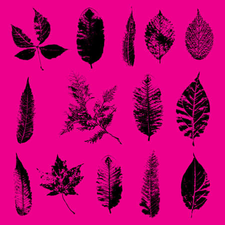 Black silhouettes of  leaves. Foliage vector
