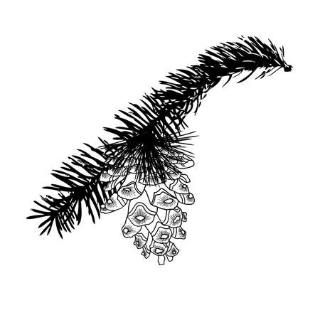 Hand drawing pine cone on the tree. Pinecone drawing on fir branch with needles.  Decoration for greeting cards or holiday background. Highly detailed classic, ink art in engraved style, Spruce. Realistic illustration. Ilustrace