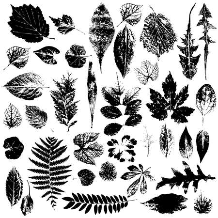 Leaf collection - vector silhouette, grunge