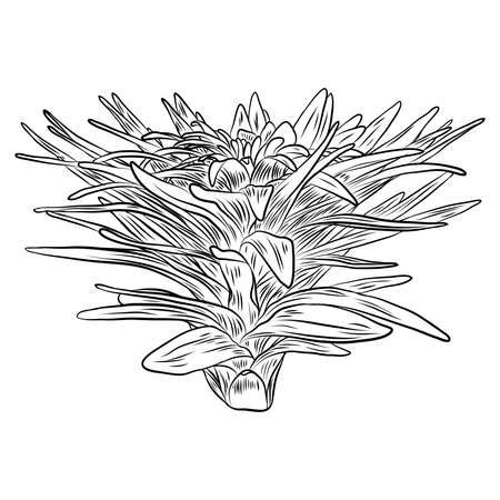 House indoor plant. Hand drawn cactuse leaf bush in sketchy doodle style. Vector. Illustration