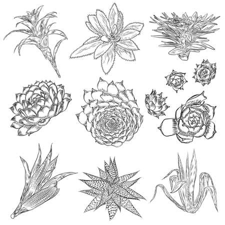 Cute cactus illustrations. Handmade set. Hand drawn outline cacti and succulents drawings. Decorative floral design elements for prints, patterns, decoration needs. Vector.