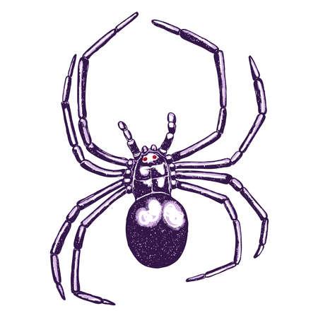 Spider icon 向量圖像