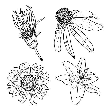 Different flowers set on a white background