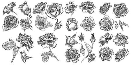 Roses icon set collection