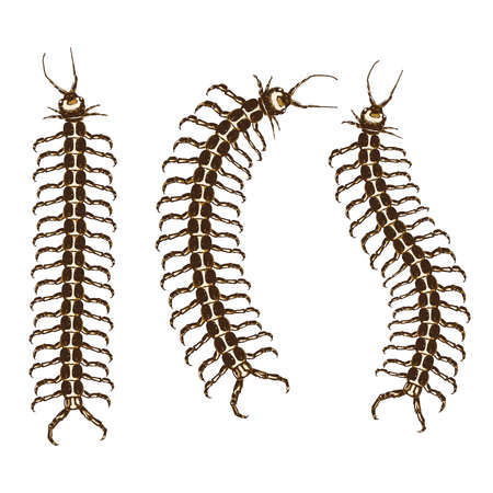 Centipede hand drawn icon 向量圖像