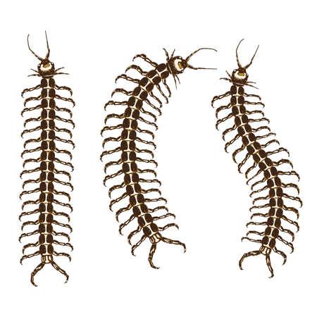 Centipede hand drawn icon Illustration
