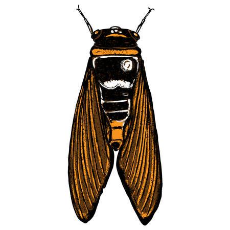 couleur cicada main insecte dessinée isolé avec des ailes sur fond blanc pour halloween