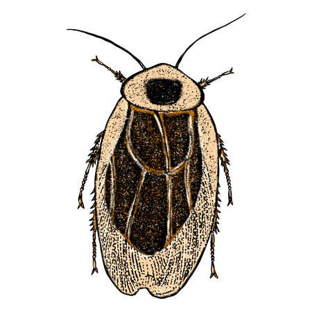 Color cockroach hand drawn. Isolated insect with wings on white background for Halloween. Illustration