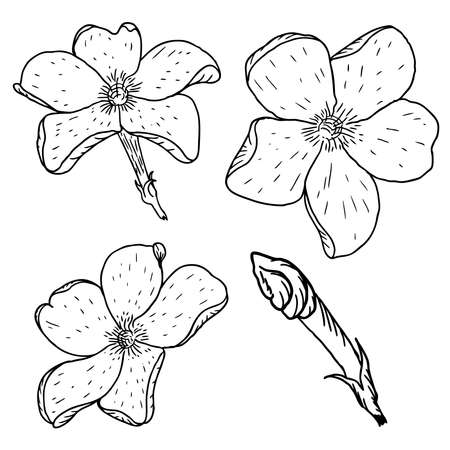 Set of flowers, black and white floral set collection of hand drawn floral elements constructor vector.