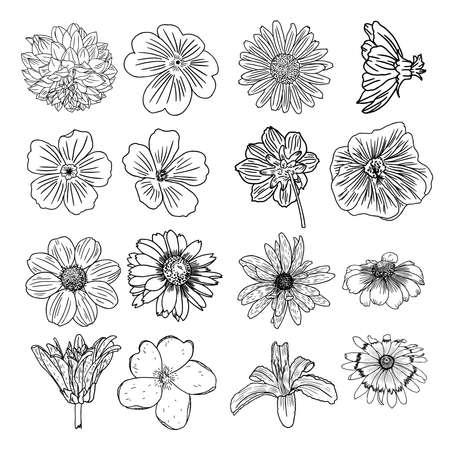 Un insieme di fiori, raccolta in bianco e nero di elementi floreali disegnati a mano. Vettoriali