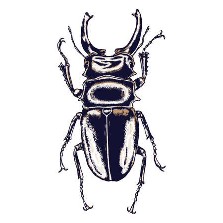 Color insects bug. Colourful species in vintage old hand drawn stippling and hatching, shading style for Halloween. Engraved stipple woodcut. Vector.