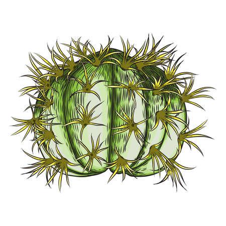 Bright vivid cacti cactus or exotic desert plant succulent. Vector.