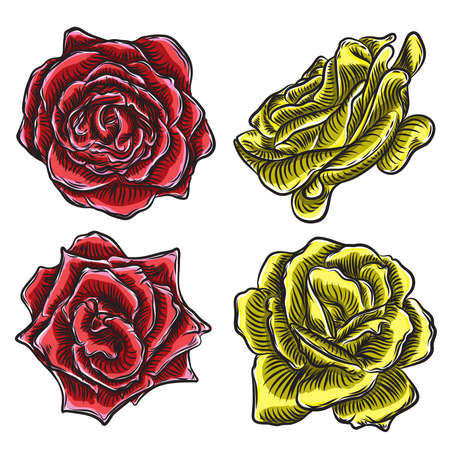 Beautiful roses heads blooming set isolated on white background. Elements for design of greeting card and invitation for the wedding, birthday, Valentine s Day, mother s day. Vector. Illustration