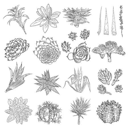 Set of house indoor plant. Set of hand drawn different cactuses in sketchy doodle style. Vector.